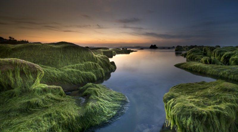Pollution par les algues