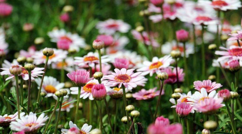 Fleurs sauvages dans un champ